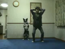 Exercising With a Dog Animal Videos